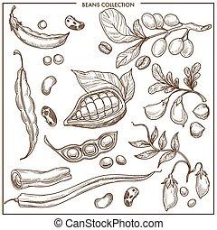 naturel, isolé, collection, haricots, organique, monochrome, illustrations, frais