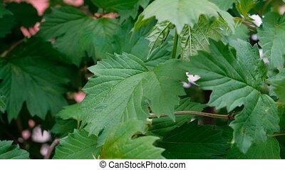 naturel, jardin, grading., couleur, grands conges, arrière-plan., vert, en mouvement, vent