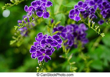 naturel, lilas, pourpre, macro, foyer, feuilles, fond, vert, branche, floral, fleurs, doux