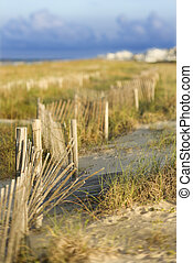 naturel, plage sable, area., dune