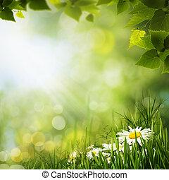 naturel, pré, flowes, arrière-plans, vert, pâquerette,...