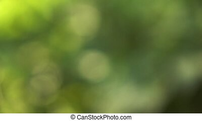 naturel, printemps, fond, vert