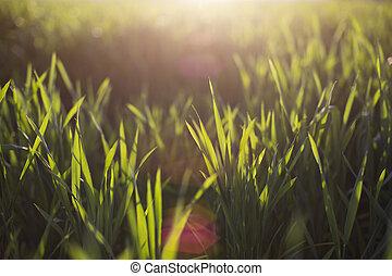 naturel, résumé, Arrière-plans, clair, soleil, sous