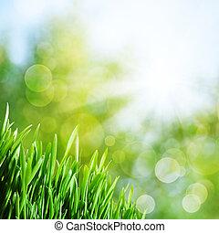 naturel, résumé, arrière-plans, herbe verte, rayon soleil