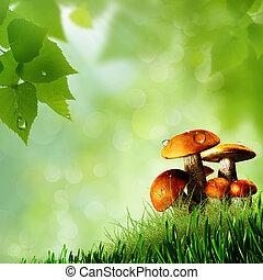 naturel, résumé, arrière-plans, mushrooms.