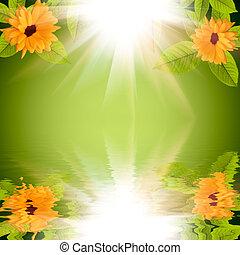 naturel, soleil, reflété, eau, arrière-plan vert, fleurs