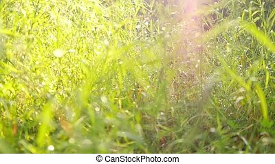 naturel, sunlights, flamme, feuilles, clair, brouillé, lentille, slowmotion., fond, bouleau, 1920x1080