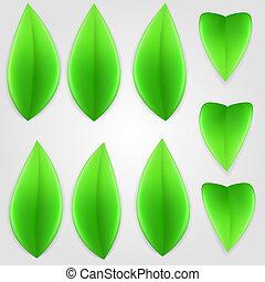 naturel, vert, leaves.
