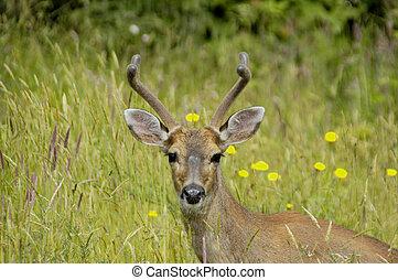 natures best - Deer roaming in fields Canada