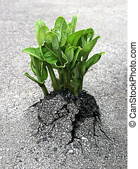 A plant breaks through the asphalt, representing the triumph of nature over humanity's creations.