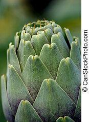 Nature's Design - Artichoke crops in a field in Malta