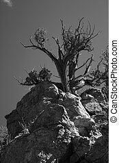 Nature's Strength - Tree growing out of rock ledge is...