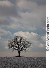 natureza, árvore inverno, 01