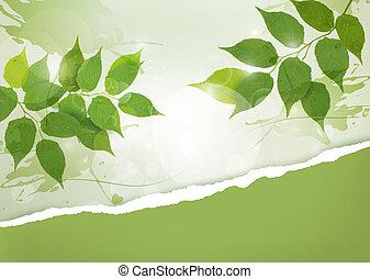natureza, fundo, com, verde, primavera, folhas, e, rasgado,...
