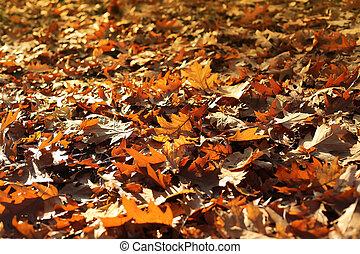 natureza, outono, fundo, com, secos, caído sai