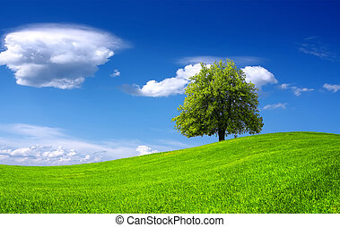 natureza, paisagem verde