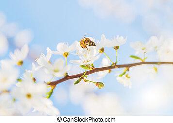 natureza, primavera, abstratos, abelha, mel, fundo, estação