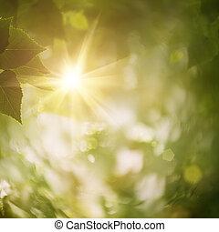 naturlig, abstrakt, bakgrunder, skog, design, din
