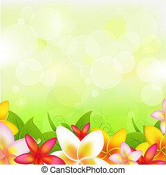 naturlig, baggrund, hos, girlande, af, plumeria