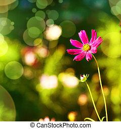 naturlig, bakgrund, med, purpurfärgad blomma