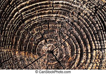 naturlig, detaljer, i, sol, tørret, træ