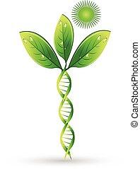 naturlig, dna, växt, begrepp, logo