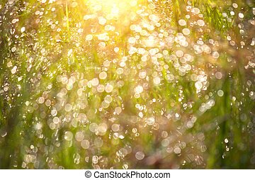 naturlig, grön fond, med, bokeh, från, morgon, dagg