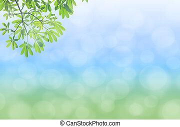 naturlig, grön fond, med, selec