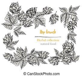 naturlig, humle, botanik, vit, skiss, isolerat, hand, frame., drawing., herbal, inramar, oavgjord, fodra, kanter, sätta, mat, collection., bakgrund.