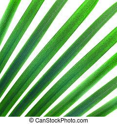 naturlig mønster, af, grønne, håndflade forlader, isoleret, på hvide