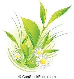 naturlig, planterar, och, kamomill