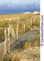 naturlig, sand strand, area., dyn