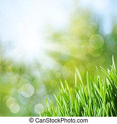 naturlig skönhet, abstrakt, bakgrunder, bokeh, grönt gräs