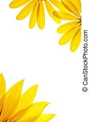 naturlig, solros, vit, details., tom, dekorerat, sida