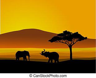 naturliv, afrika