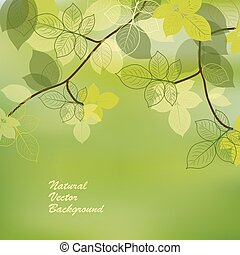 natuur, achtergrond, met, brink loof, .