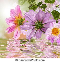 natuur, bloemen, mooi, achtergrond