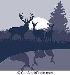 natuur, hertje, illustratie, regen, wild, geanimeerd, landscape
