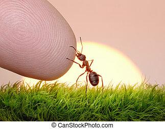 natuur, -, mier, menselijk, vinger, vriendschap