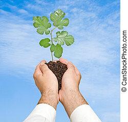 natuur, symbool, kiemplant, boompje, bescherming, handen