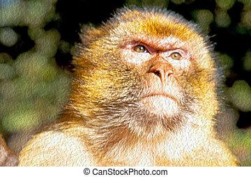 natuurlijke , aap, afrika, op, marocco, struik, achtergrond,...