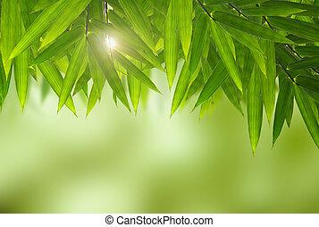 natuurlijke , achtergronden, met, bamboe, bladeren