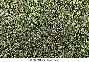 natuurlijke , mos, work., natuur, oppervlakte, groene achtergrond, rots, ontwerp, jouw