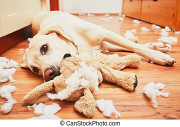 Naughty dog home alone - yellow labrador retriever destroyed...