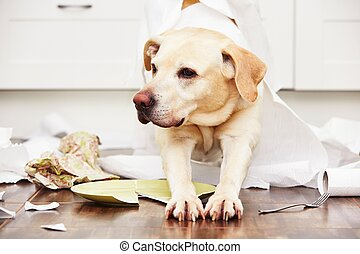 Naughty dog - Lying dog in the middle of mess in the kitchen...