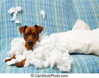 naughty playful puppy dog after biting a pillow tired of...
