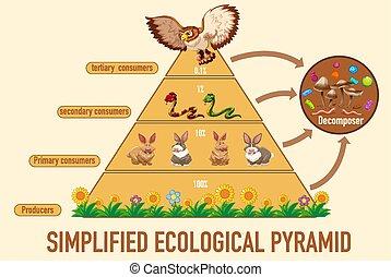 nauka, uproszczony, ekologiczny, piramida