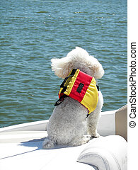 Nautical Pup