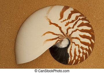 nautilus, areia, concha