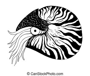 Nautilus coloring book black and white vector hand drawn illustration isolated on white background.